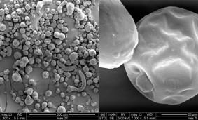 Microcapslas de aceite de Lino.