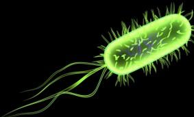 Bacteria Escherichia Coli.