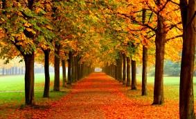 Calle arbolada en otoño