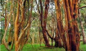 Día-de-los-Parques-Nacionales-Argentinos
