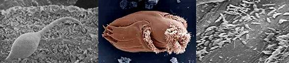hongos-bacterias-protozoos