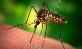 Curiosidades-que-no-sabias-sobre-los-mosquitos-500x285