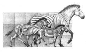 Hipparion-species